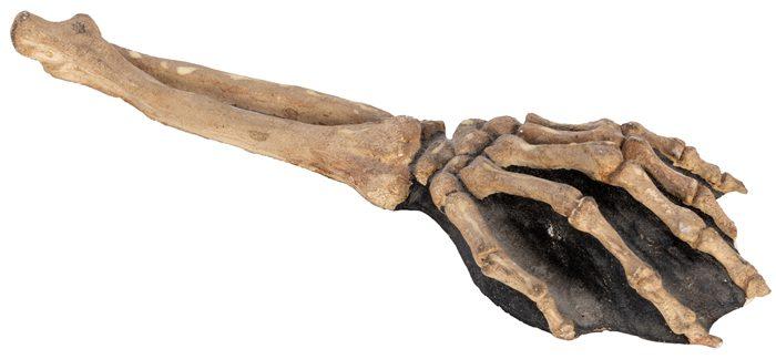 Disney Auction 3 - Snow White Skeleton